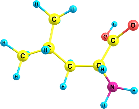 leu: Leucine, Leu, is a branched-chain alpha-amino acid, classified hydrophobic due to the isobutyl side chain