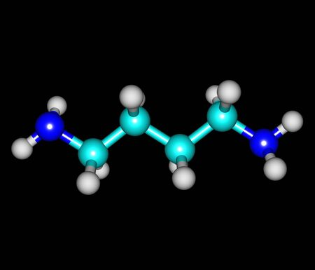 chemical compound: Putrescine - tetramethylenediamine - is a foul-smelling organic chemical compound - butanediamine - that is related to cadaverine. 3d illustration