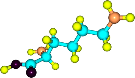 lysine: Lysine - Lys - is an amino acid. It is an essential amino acid for humans. 3d illustration