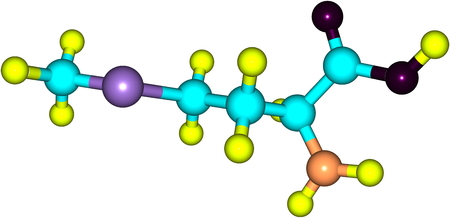 amino: A model of a molecule of methionine, an essential amino acid. Amino acids are the building blocks of proteins and have many functions in metabolism. 3d illustration Stock Photo