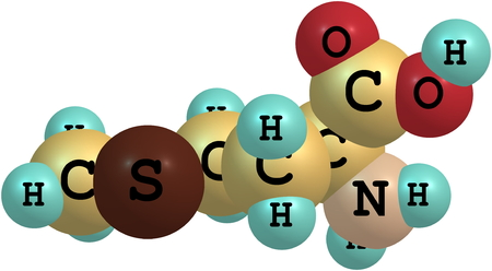 acids: A model of a molecule of methionine, an essential amino acid. Amino acids are the building blocks of proteins and have many functions in metabolism. 3d illustration Stock Photo