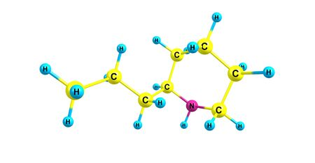 Coniine is a poisonous alkaloid found in poison hemlock, the yellow pitcher plant. 3d illustration