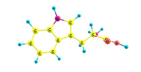 Tryptophan or Trp is an amino acid that is used in the biosynthesis of proteins. 3d illustration