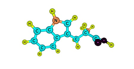 structural formula: Tryptophan or Trp is an amino acid that is used in the biosynthesis of proteins. 3d illustration