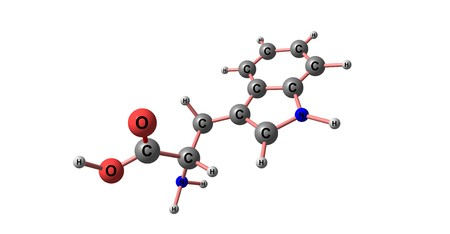 biosynthesis: Tryptophan or Trp is an amino acid that is used in the biosynthesis of proteins. 3d illustration