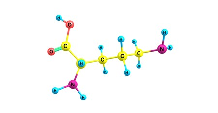 Ornithine is a non-proteinogenic amino acid that plays a role in the urea cycle. Ornithine is abnormally accumulated in the body in ornithine transcarbamylase deficiency. 3d illustration Stock Photo