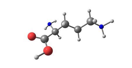 Ornithine is een niet-proteïnogeen aminozuur dat een rol speelt in de ureumcyclus. Ornithine is abnormaal geaccumuleerd in het lichaam bij ornithine-transcarbamylase-deficiëntie. 3d illustratie