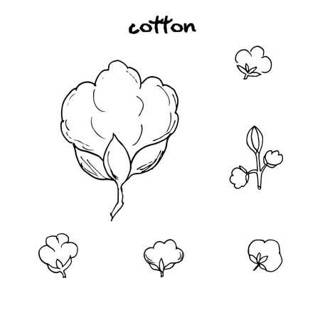 cotton: Cotton flower. Vector illustration