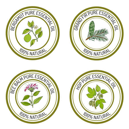 Set of essential oil labels: bergamot, grand fir, bee balm, common hop. Vector illustration