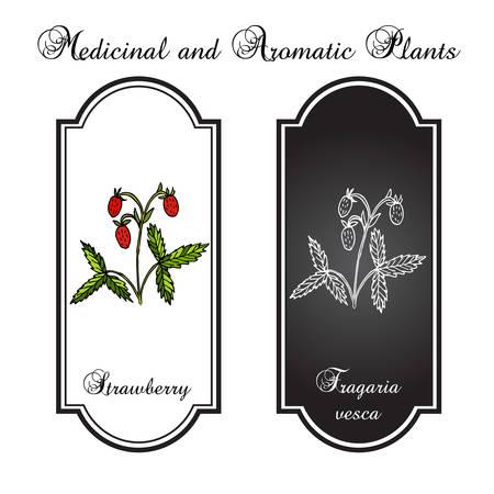 bayas silvestres de fresas y hojas Ilustración de vector