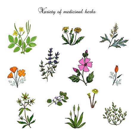 Vector conjunto de plantas medicinales