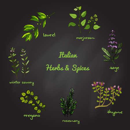 Italian herbs and spices - winter savory, laurel, marjoram, oregano, rosemary, sage, thyme. Vector illustration Çizim