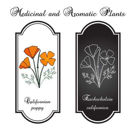 California poppy flowers. Vector illustration Illustration
