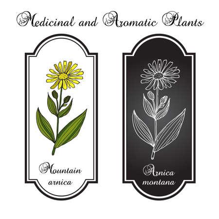 medicinal plant: Arnica Montana. Medicinal plant