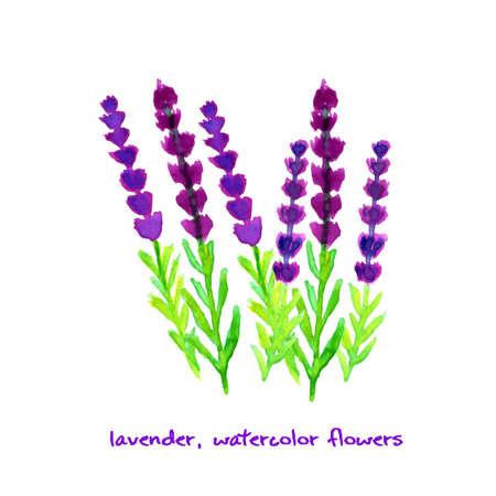 Watercolor lavender. Vector illustration