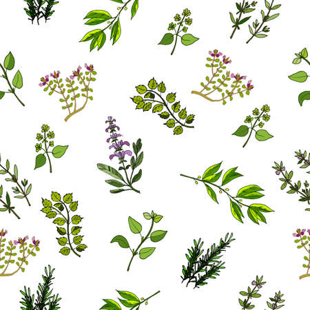 savory: Seamless vector pattern with hand drawn herbs and spices. Illustration