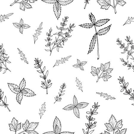 savory: Seamless vector pattern with hand drawn herbs and spices Illustration