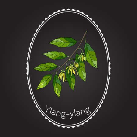 odor: Branch of ylang-ylang with flowers, vector illustration