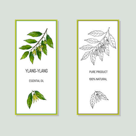 essential oil: Ylang-ylang essential oil label. Vector illustration Illustration