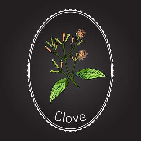clove: Clove, natural spice. Vector illustration