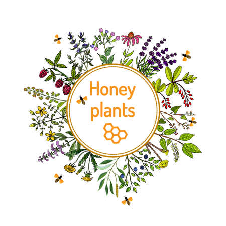 sources: Plants - nectar sources for honey bees. Vector set Illustration