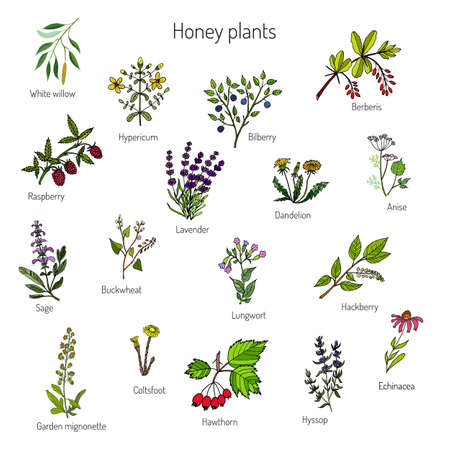nectars: Plants - nectar sources for honey bees. Vector set Illustration