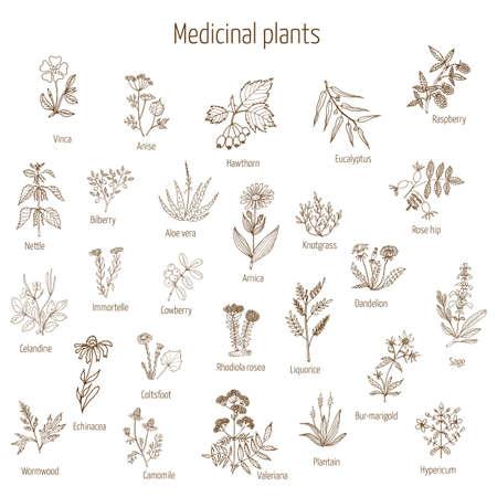 Vintage-Kollektion von Hand gezeichnet medizinischen Kräutern und Pflanzen. Vektor-Illustration.