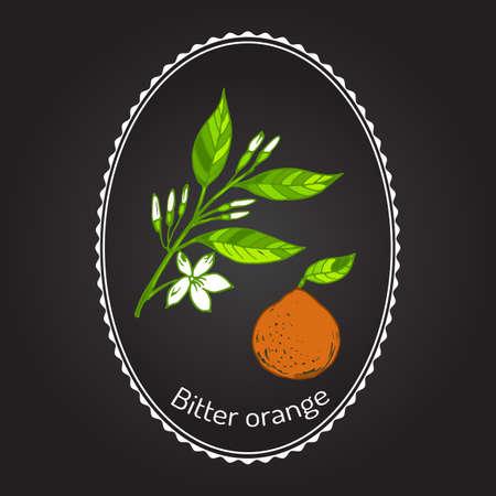 Bitter orange, Seville orange, sour orange, bigarade orange, or marmalade orange, twig with flowers. Vector illustration Illustration