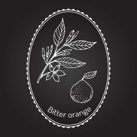 Bitter orange, Seville orange, sour orange, bigarade orange, or marmalade orange, twig with flowers. Vector illustration