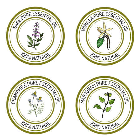 marjoram: Set of essential oil labels: sage, vanilla, chamomile, marjoram. Vector illustration Illustration