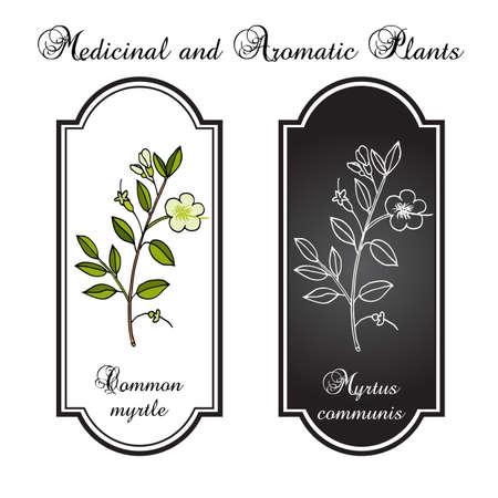 Myrtle ou Myrtus communis, illustration vectorielle Vecteurs