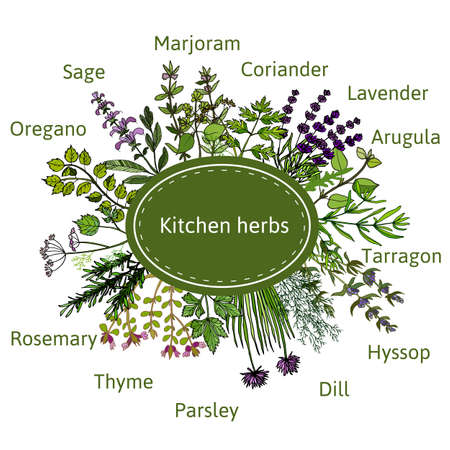 Set of vector hand-drawn fresh kitchen herbs Illustration