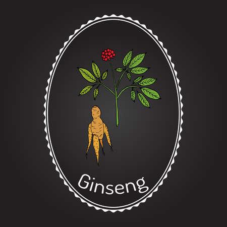 Ginseng - medicinal plant, botanical vector illustration