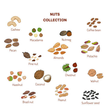 brazil nut: Set of nuts and seeds. Hand drawn vector illustration