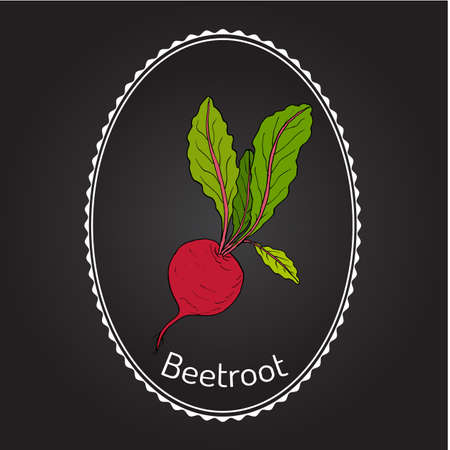 Beetroot with green leaves.  Vector illustration. Illustration