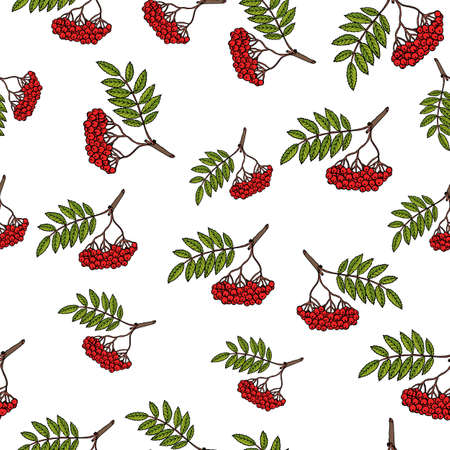 Seamless vector pattern with hand drawn rowan tree branches.