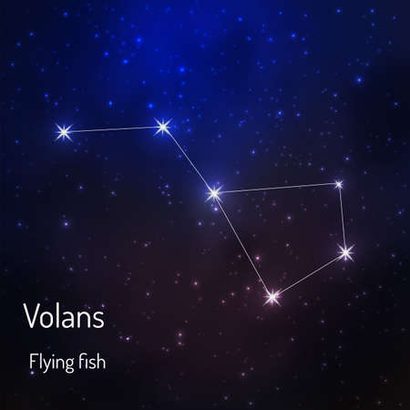Volans (Flying fish)constellation in the night starry sky. Vector illustration