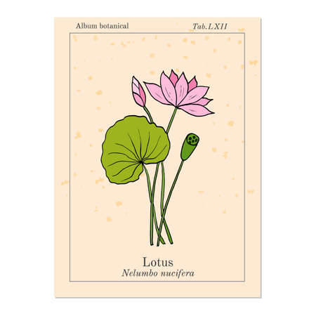 Lotus plant with flower hand drawn botanical vector illustration lotus plant with flower hand drawn botanical vector illustration stock vector 73016526 mightylinksfo