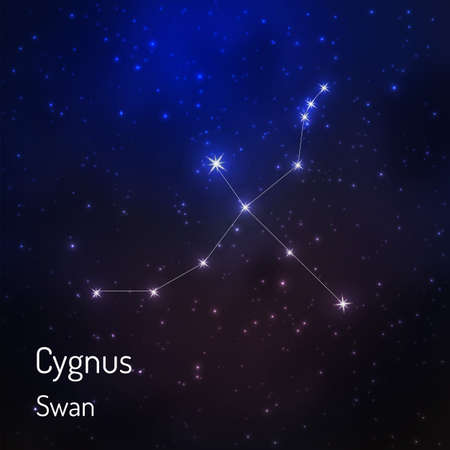 Cygnus (swan) constellation in the night starry sky. Vector illustration