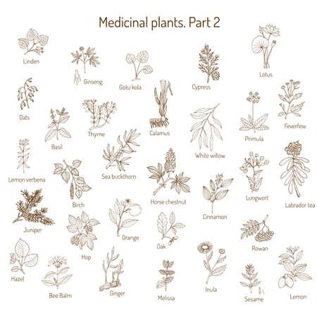 Collezione d'annata di erbe e piante mediche disegnate a mano. Set di botanica, illustrazione vettoriale. Vettoriali