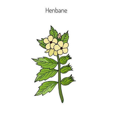 nightshade: Black Henbane or Hyoscyamus niger. Poisonous plant. Hand drawn botanical vector iluustration