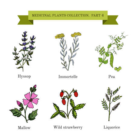 Vintage collection of hand drawn medical herbs and plants. Botanical vector illustration.