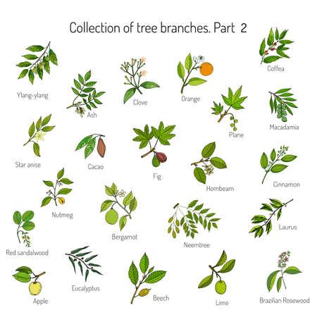 Set di diversi rami degli alberi. Mano illustrazione vettoriale disegnato Vettoriali