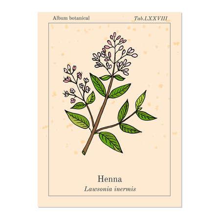 tree: Henna or hina, henna tree, mignonette tree, Egyptian privet. Hand drawn botanical vector illustration