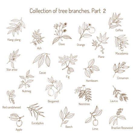 Set of different tree branches. Hand drawn vector illustration Vettoriali