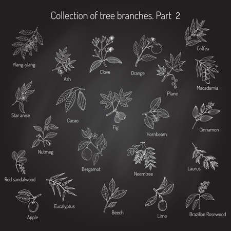 Set of different tree branches. Hand drawn vector illustration Illustration