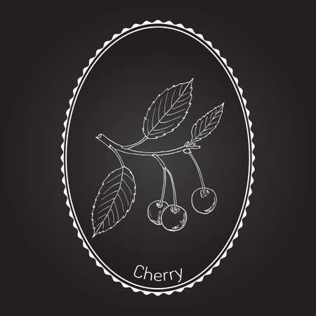 jam tarts: Sour cherry (or tart cherry, or dwarf cherry) branch with cherries and leaves. Hand drawn botanical vector illustration Illustration