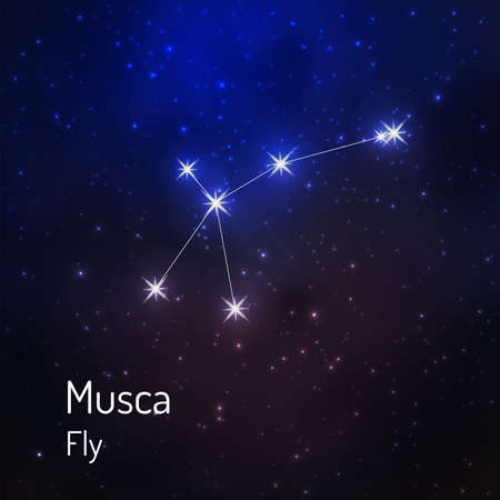 Musca, Fly constellation in the night starry sky. Vector illustration