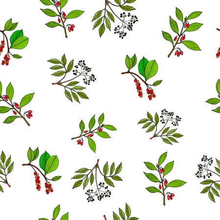cowberry: Hand drawn berries plants. Seamless pattern. Vector illustration