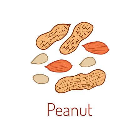 Peanuts. Hand drawn illustration